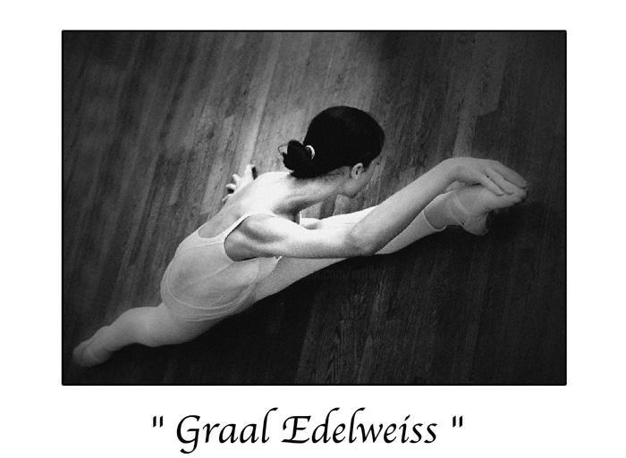 Marc Acquaviva - Graal Edelweiss