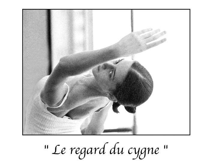 Marc Acquaviva - Le regard du cygne