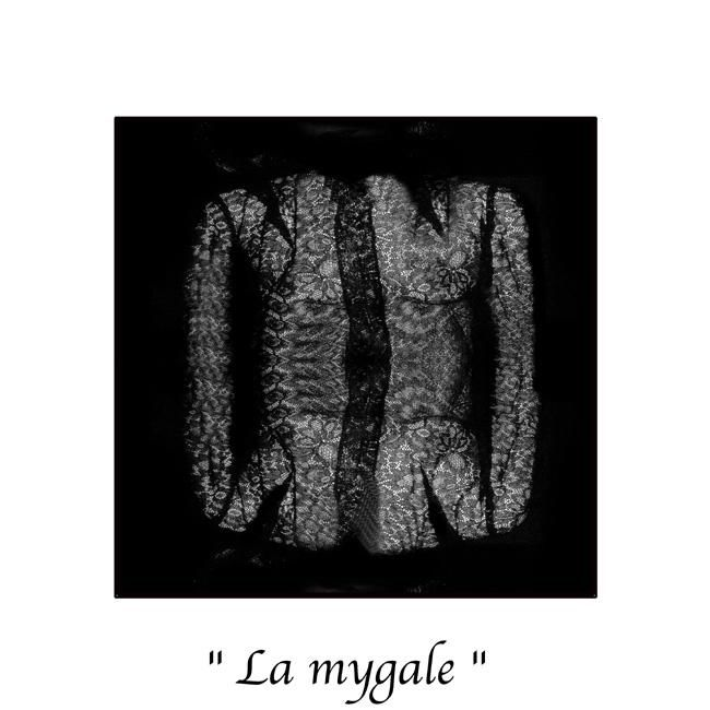 Marc Acquaviva - La mygale